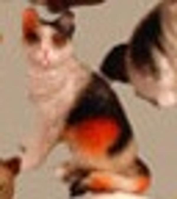 VMMP3006 - Cat - Assorted - Polyresin