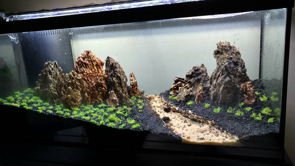 Manzanita driftwood aquarium 1000 aquarium ideas for Driftwood for fish tank