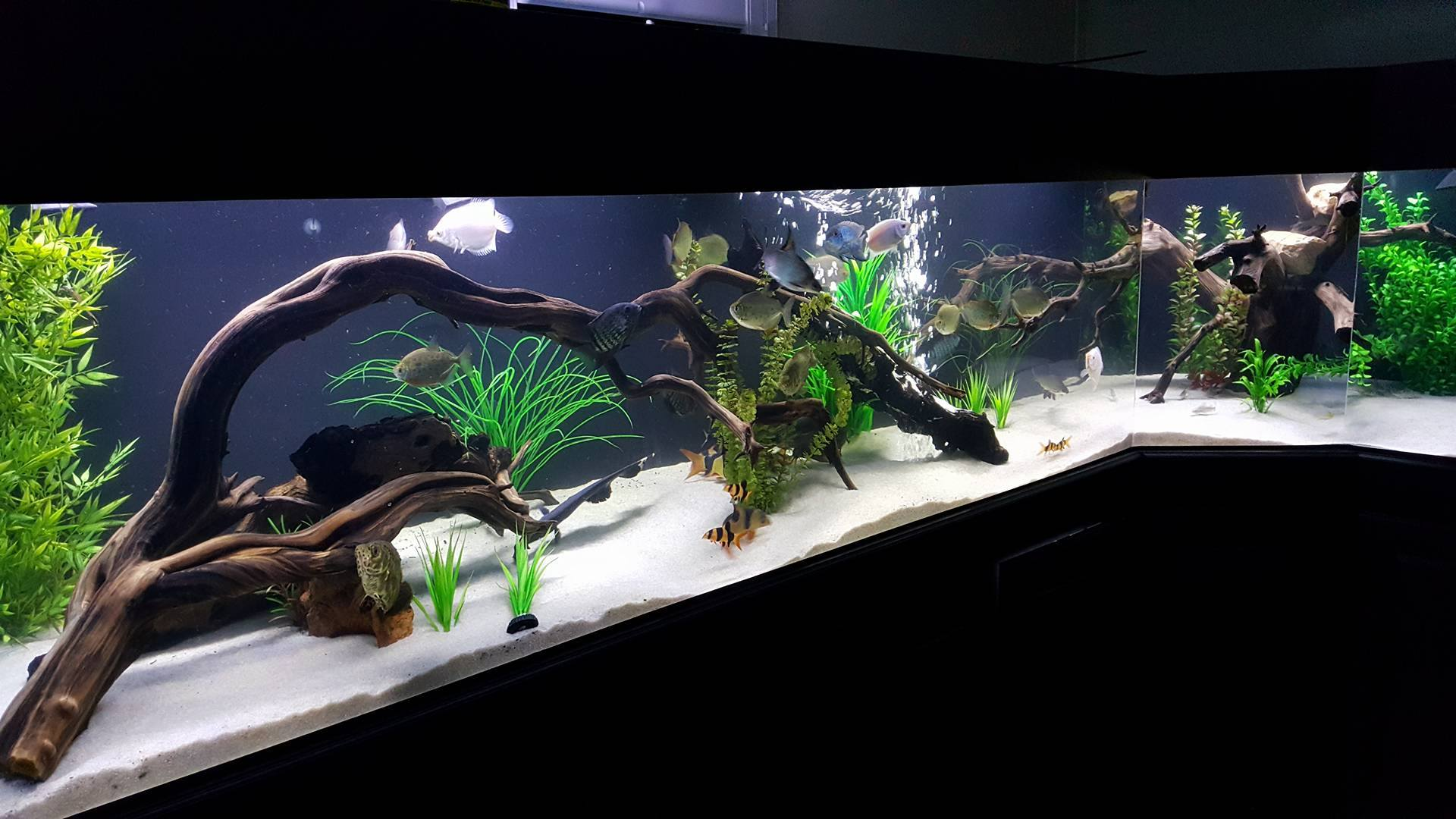 driftwood for sale for aquarium 1000 aquarium ideas