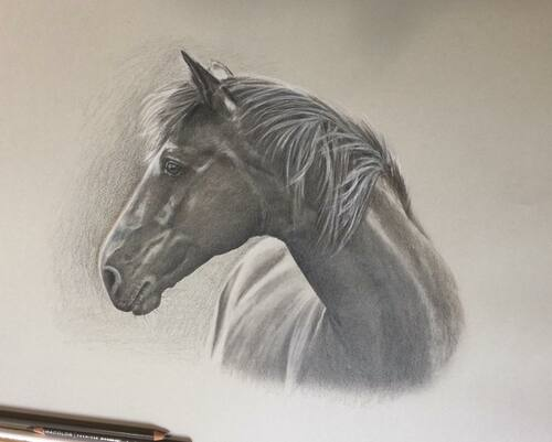 Horse Portrait - Sepia - DEPOSIT