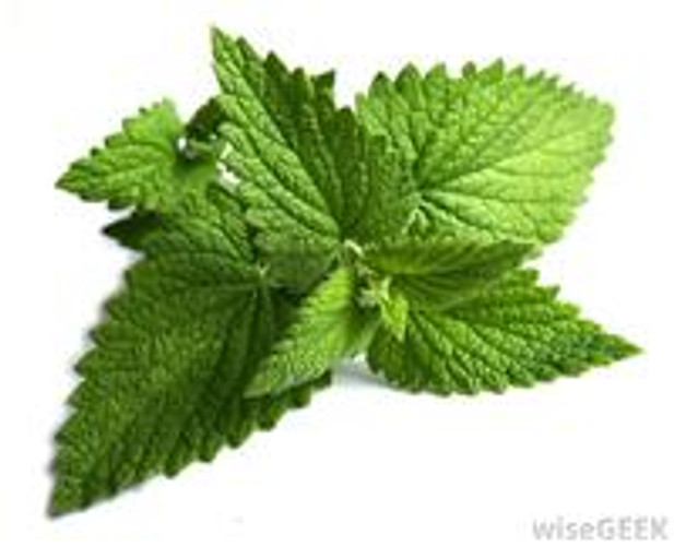 The benefits series: the Power of Peppermint