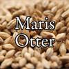 Maris Otter