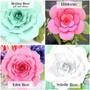 Regina rose (small regina included as well), Hibiscus, Eden rose, Sybelle rose.