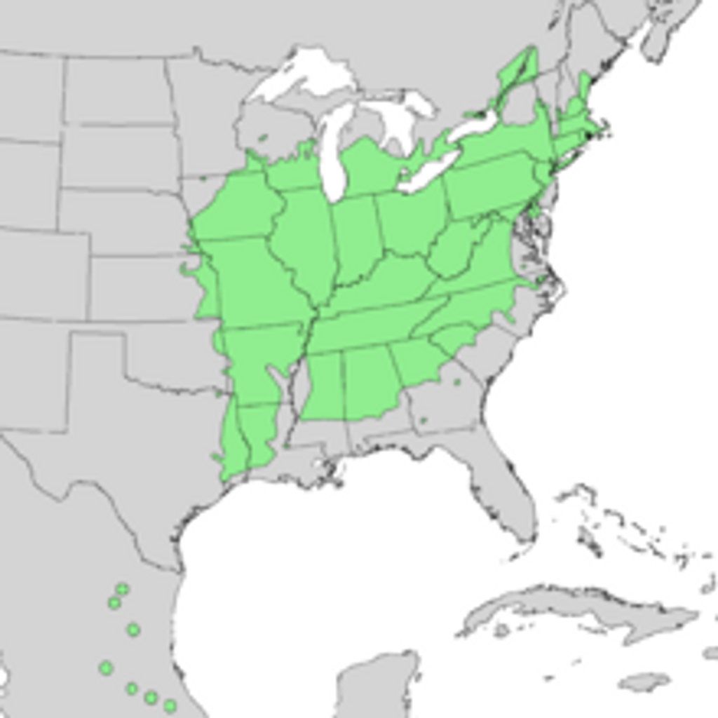 Carya glabra native range map