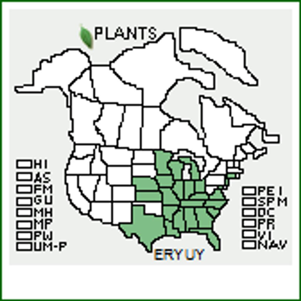 Eryngium yuccafolium native range map