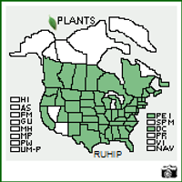 The USDA Map shows R. hirta country-wide, but we have a southern seed source, so we recommend Zones 5-9
