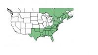 Aronia arbutifolia Native Range Map