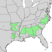Acer saccharum floridanum USA Range Map