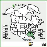 Rhododendron alabamense native range map