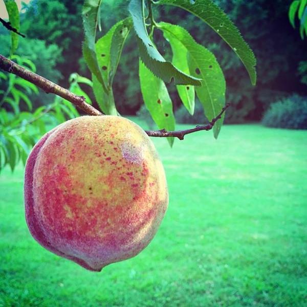 Southern Peach Margarita Mix