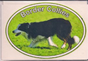 Border Collie Decal Sticker