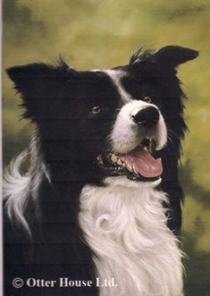 Border Collie Flag