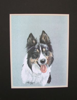 Tri Color Border Collie Head Study