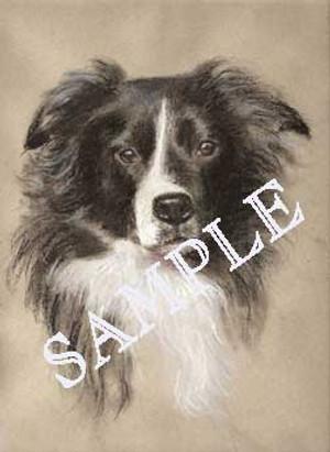 Original Portrait of Your Dog