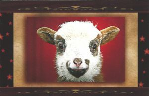 """Sheepish Smile"" Note Card by Vickie Atkins Close"