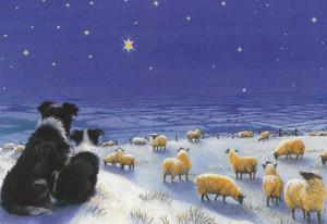 Border Collie & Sheep Christmas Card Set