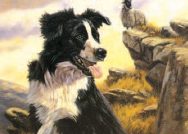 The Collie Note Card