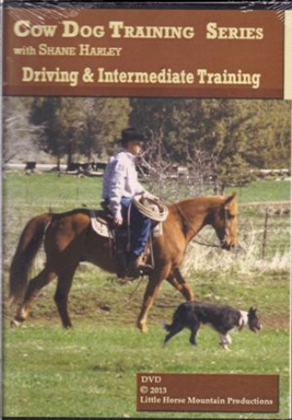 Driving & Intermediate Training with Shane Harley