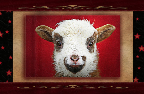"""Sheepish Smile"" Matted Print by Vickie Atkins Close"