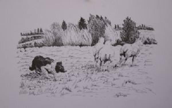 Tess with 3 Sheep Matted Print by Beth Walker