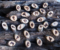 Oak Wood Rune Set with Pouch