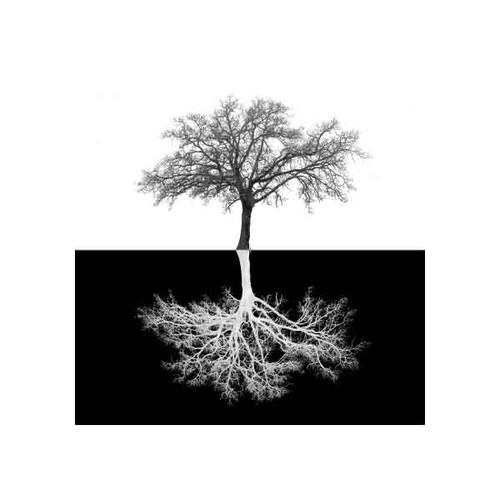INVERSE TREE 50x50