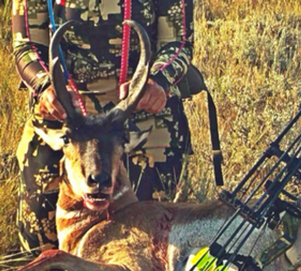 Element Archery making a smackdown on Wyoming Antelope.