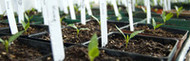 Virginia Tech Catawba Sustainability Center offering Growers Academy