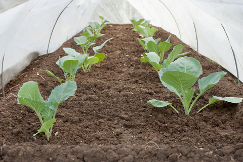 Pro 42 Row Covers by AgroFabric 7 ½' x 1000'