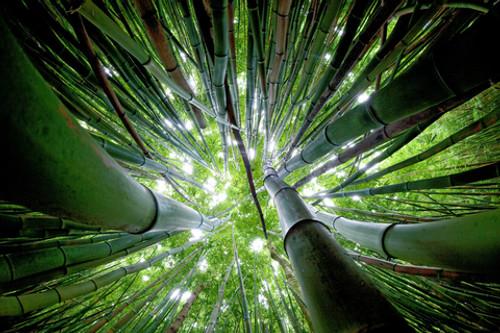 Wondrous Bath Bars - Fresh Bamboo