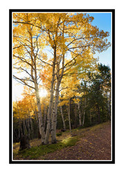 Judith's Tips for Photographing Trees with Autumn Leaves: