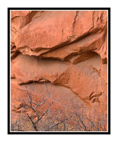 Rock and Tree Texture in Garden of the Gods in Colorado Springs, Colorado 982