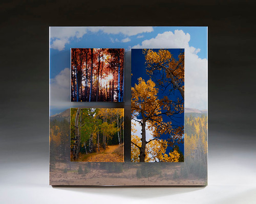 Aspen Trees in Mueller State Park Wood Block Wall Art
