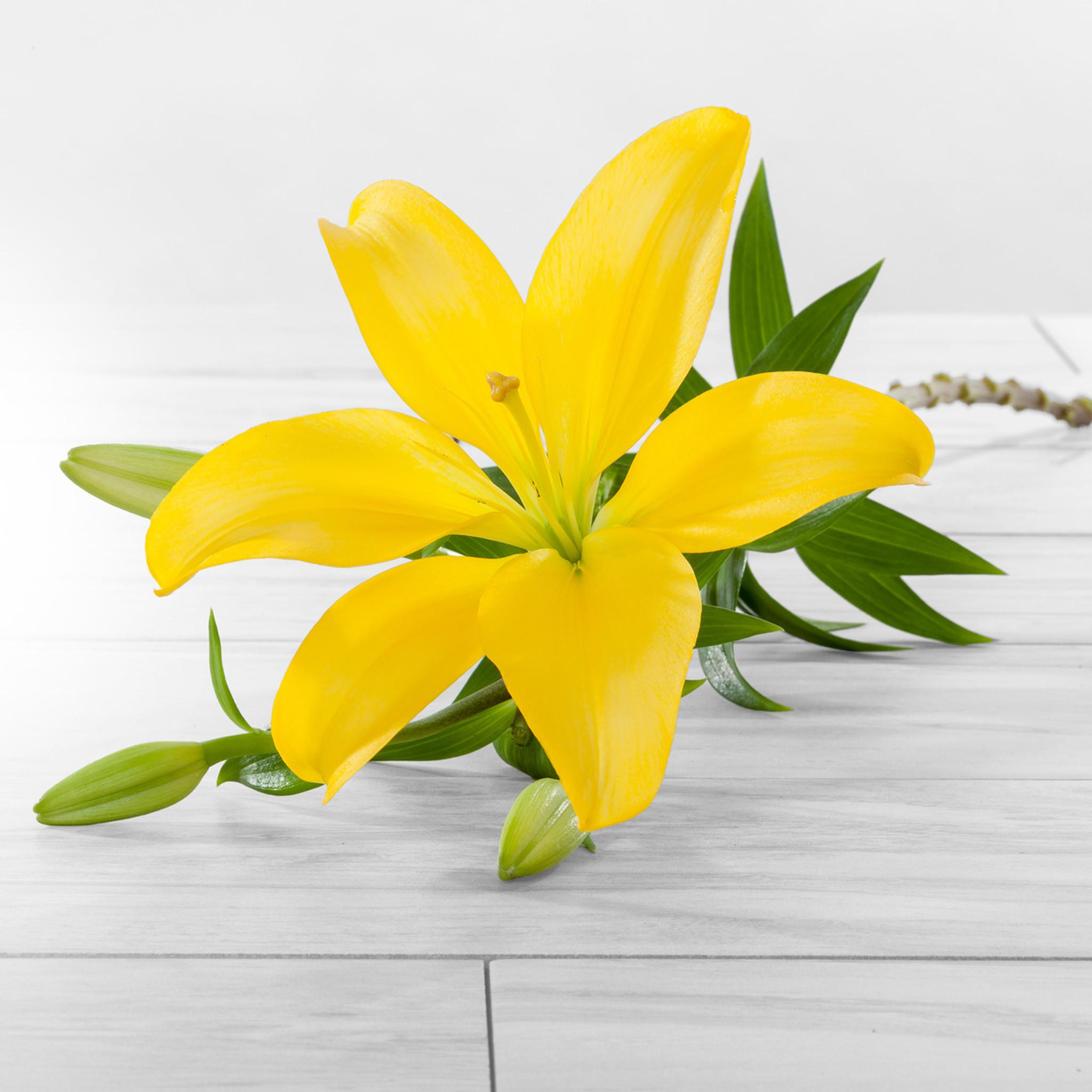 Asiatic lilies flower farm shop asiatic lilies izmirmasajfo
