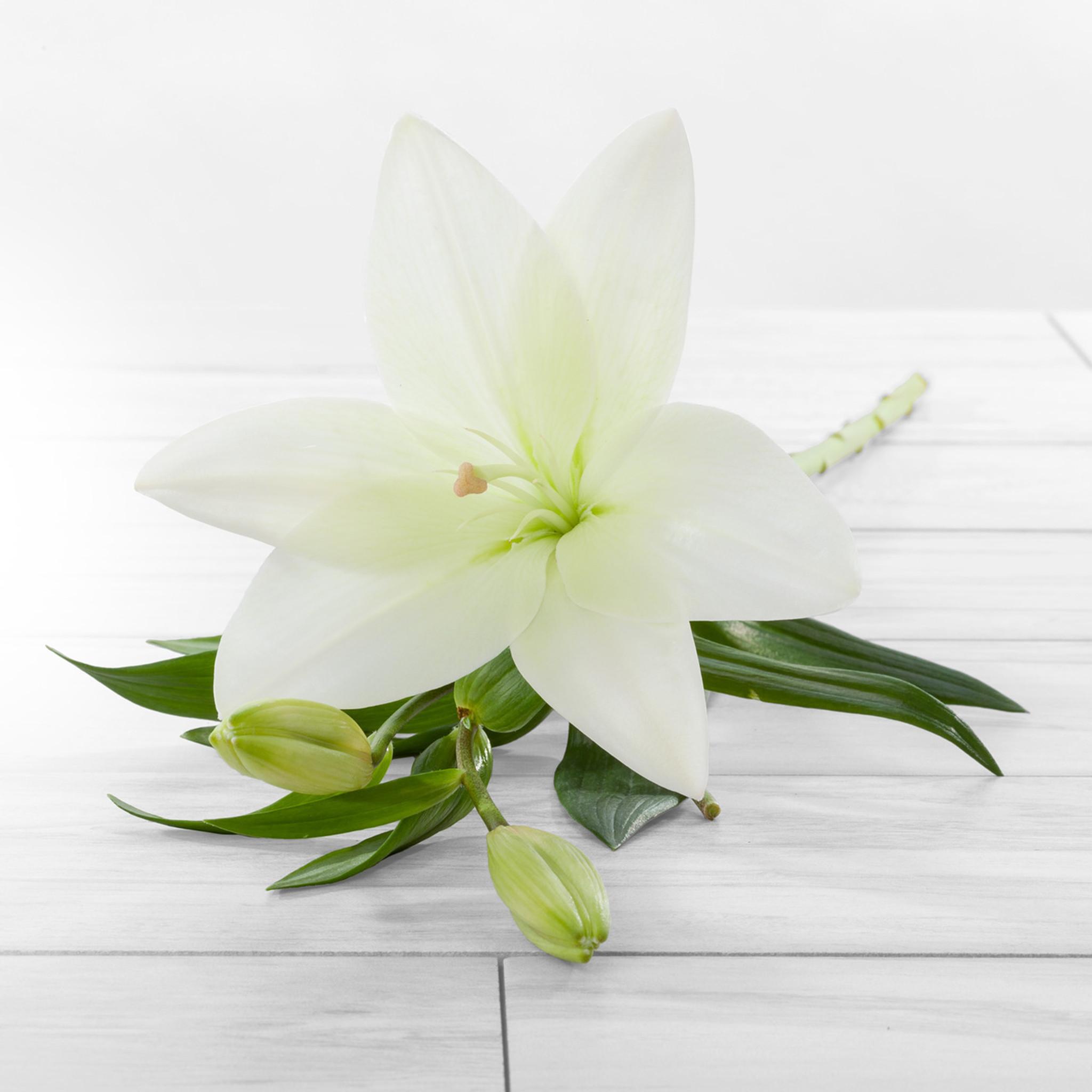Asiatic Lilies Flower Farm Shop