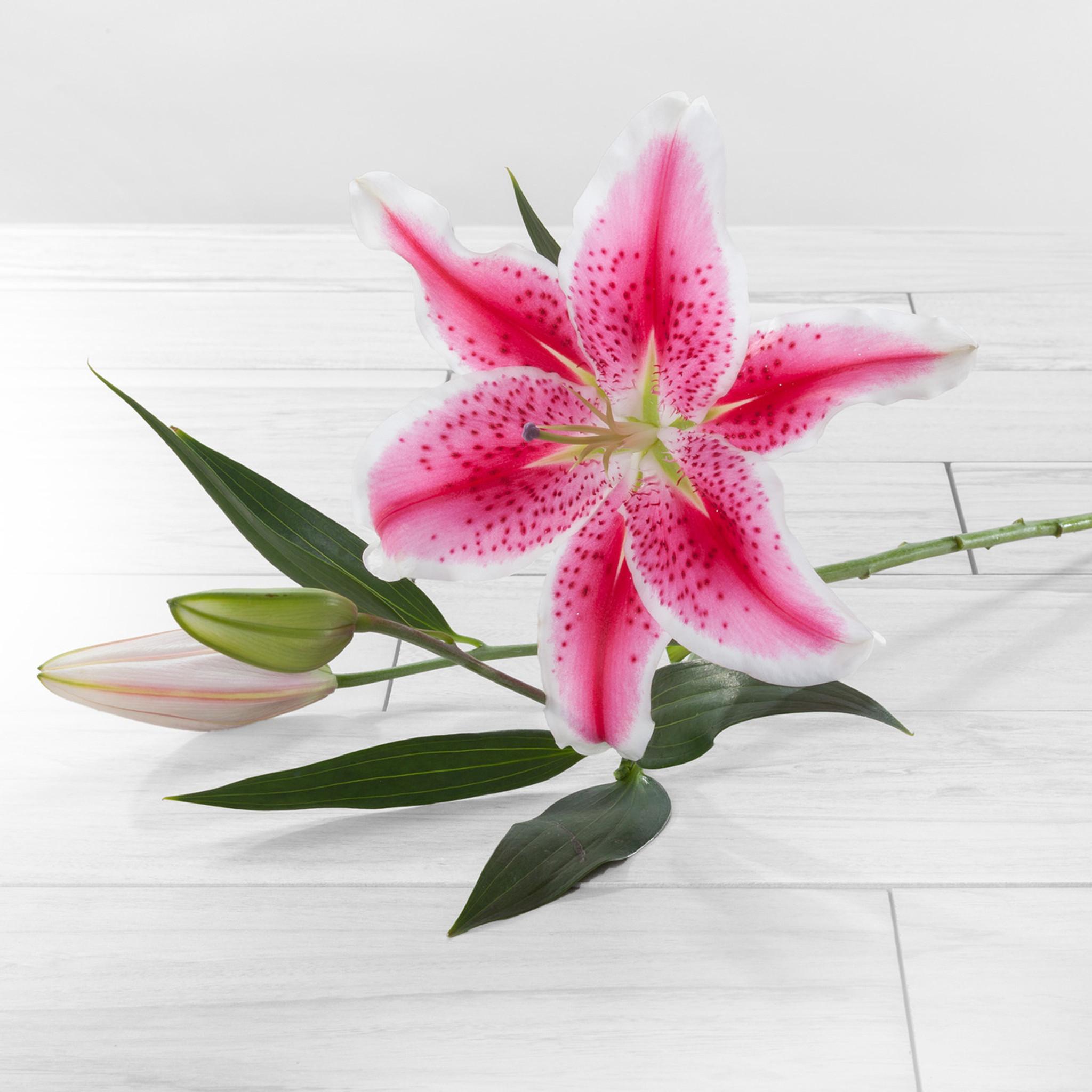 Oriental lilies flower farm shop oriental lilies izmirmasajfo