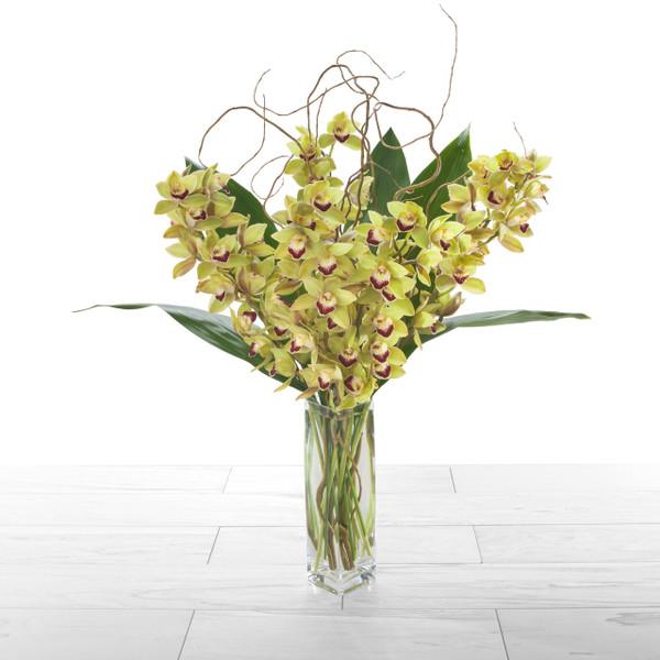 Orchid Abundance