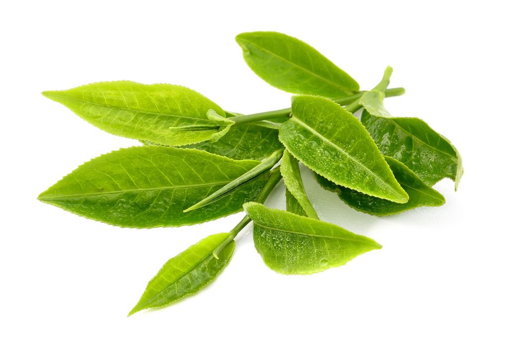 Green Tea Body Oil