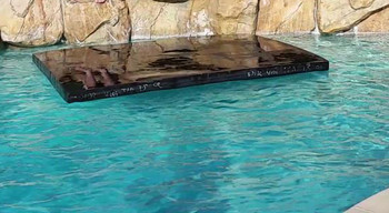 Savior Cover Pool Floating 16 x 12 x 4