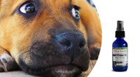 """High Anxiety- fear & anxiety relief for responsible, """"on the job"""" type dogs"""