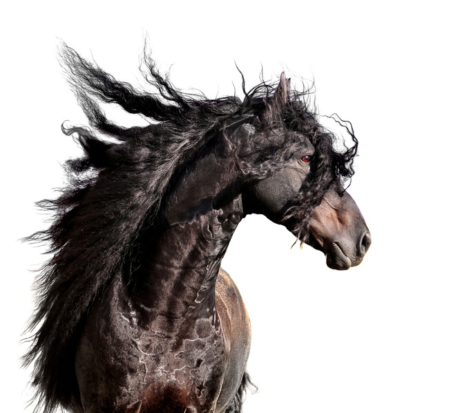 Im Too Sexy For My Bit - Bitting the Baroque Horse