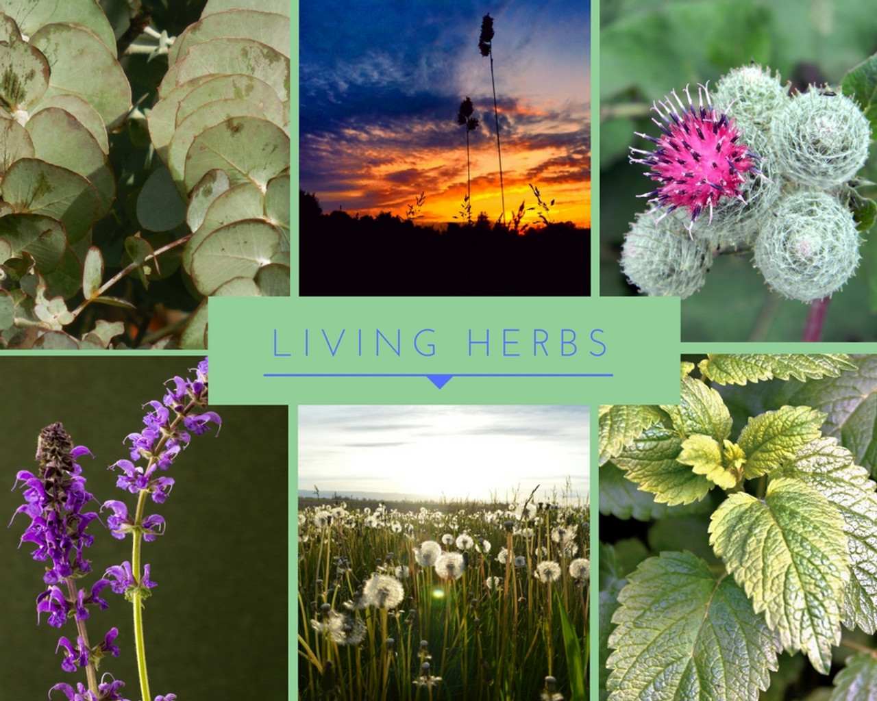 Living Fermented Herbs: Optimizing Health Through Plants