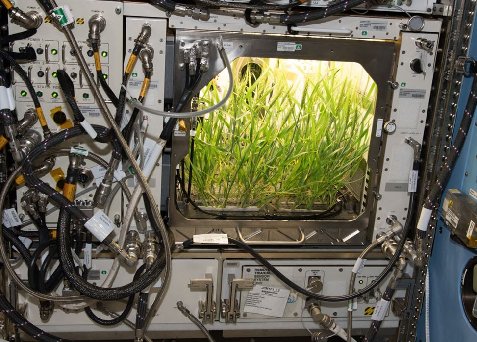 International Space Station Advanced Plant Habitat (APH) module