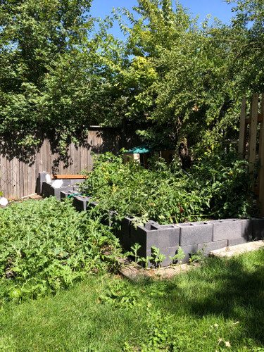 Where Should the Raised Garden Bed Go?