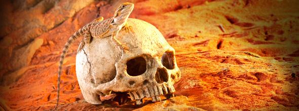 primate-skull-1-.jpg