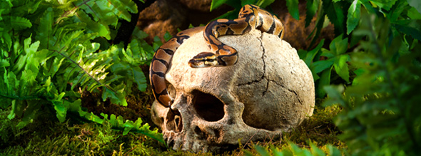 primate-skull-2.jpg