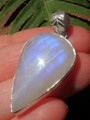 Royal Blue Flash Rainbow Moonstone Pendant in Sterling Silver (Includes Silver Chain)