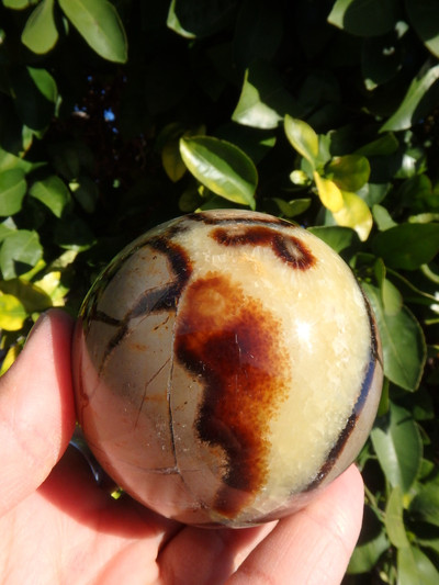Large Septarian Dragon Sphere Carving