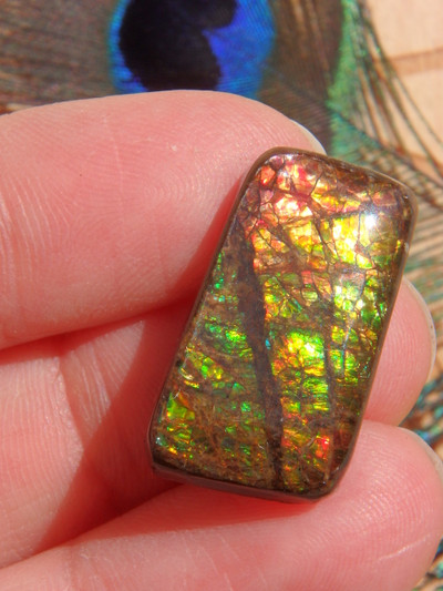 Fantastic Flashes of Color Ammolite Cabochon (Ideal for Wire Wrapping)