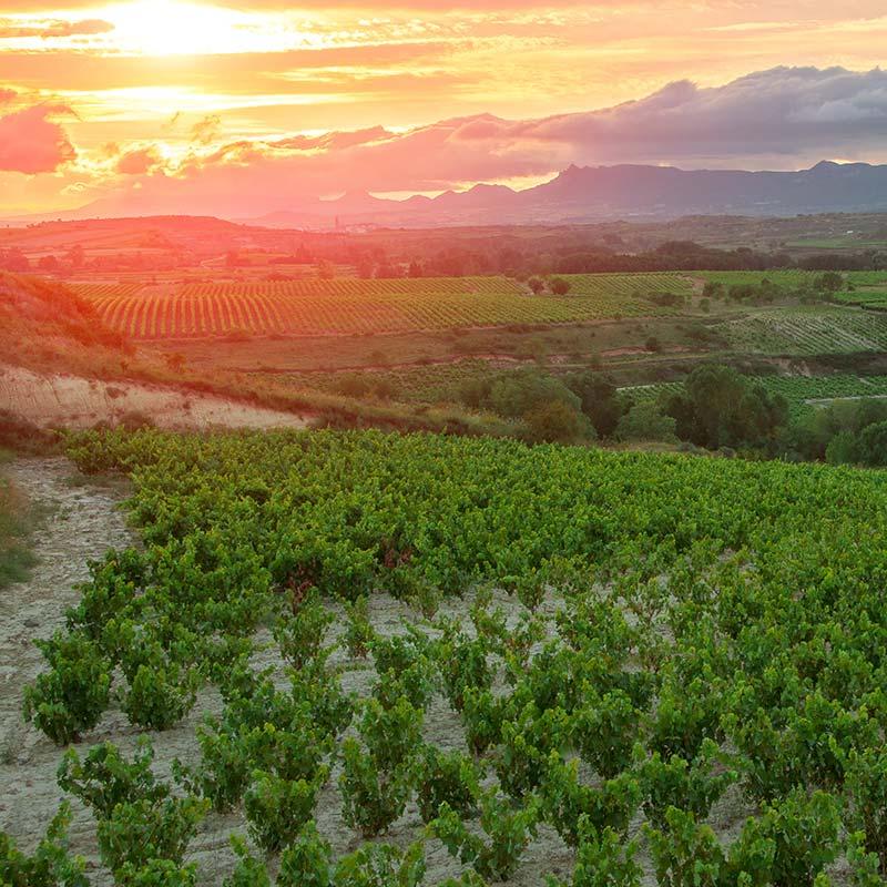 Comando G: Pushing Boundaries In Spanish Wine